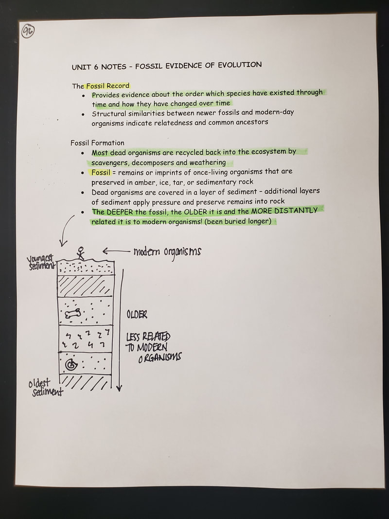 Category: Class Notes